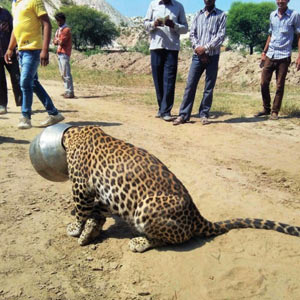 Fun Time: THE TALE OF THE THIRSTY LEOPARD