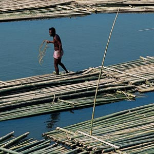 03_14-Travel_Bamboo.jpg