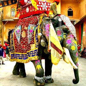 04_15_Travel_Elephant.jpg