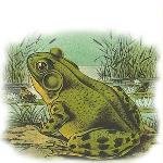 TalkTime: Why Frogs Matter